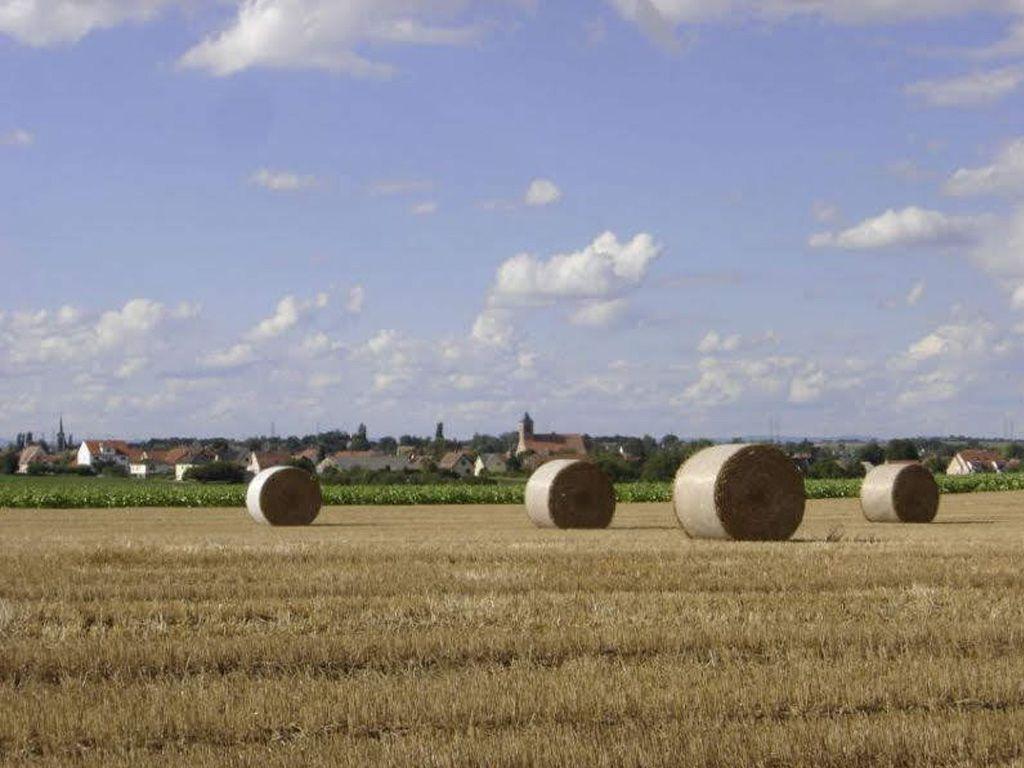 Mairie de Dingsheim (67370)
